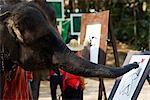 Thailand,Chiang Mai,Elephant Camp,Elephant Show,Elephant Painting
