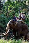 Thaïlande, Chiang Mai, le campement de l'Eléphant, tourisme Elephant Trekking