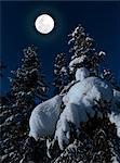 Près de neige lourde chargée épinettes dans le clair de lune de la pleine lune SAU Arts à Anchorage, Alaska du centre-sud, hiver, COMPOSITE