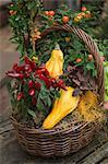 Herbstliche Dekoration mit ornamentalen Kürbis