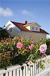 Rosen und weißen Zaun vor Haus