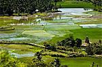 Rice Fields, West Sumba, Lesser Sunda Islands, Indonesia