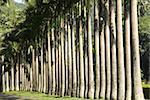 Peradeniya Botanic Gardens, Kandy, Hill Country, Sri Lanka, Asia