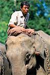 Elephant camp, Division d'Ayeyarwaddy, Myanmar (Birmanie), Asie