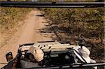 On safari, South Luangwa National Park, Zambia, Africa
