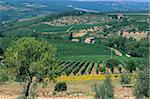 Vignobles, Chianti, Toscane, Italie, Europe