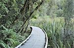 Path through rainforest, Westland Tai Poutini National Park, UNESCO World Heritage Site, West Coast, South Island, New Zealand, Pacific