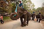 Elephant Conservation Centre, Lampang, Thaïlande, l'Asie du sud-est, Asie