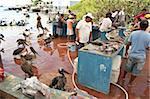 Marché aux poissons, Puerto Ayora, Isla Santa Cruz (Santa Cruz island), aux îles Galapagos, Equateur, Amérique du Sud