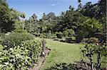 Jardin d'étudiants, jardins botaniques de Peradeniya, Kandy, Sri Lanka, Asie