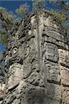 Glyphes mayas du côté de Stela P, Cour Ouest, parc archéologique de Copan, patrimoine mondial de l'UNESCO, Copan, au Honduras, Amérique centrale