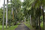 Sir Seewoosagur Ramgoolam Botanical Garden, Ile Maurice, océan Indien, Afrique