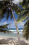 Plage, palmiers et surf à Long Bay, Tortola, British Virgin Islands, West Indies, Caraïbes, Amérique centrale