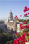 Fleurs de bougainvilliers devant le Capitole bâtiment, la Havane, Cuba, Antilles, Amérique centrale