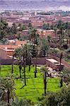 Bas niveau farming, oasis de palmiers dattiers, Figuig, province de Figuig, région de l'Oriental, Maroc, Afrique du Nord, Afrique