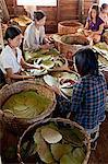 Production de cigares, près du lac Inle, Myanmar
