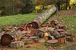 Log Chopped into Pieces, Stourhead, Wiltshire, England