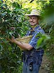 Plantagenbesitzer, die Kommissionierung Kaffee Beeren, Finca Vista Hermosa Kaffeeplantage, Agua Dulce, Departamento Huehuetenango, Guatemala