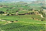 Overview of Vineyards, La Rioja Province, Spain