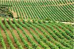 Übersicht über die Weinberge, Provinz La Rioja, Spanien