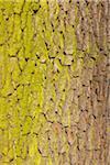 Chêne écorce, Aschaffenburg, Franconie, Bavière, Allemagne