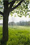 Park, Nilkheim, Aschaffenburg, Franconia, Bavaria, Germany