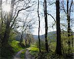 Wald, Oberbessenbach, Spessart, Bayern, Deutschland