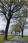 Oak Trees and Walkway, Germany