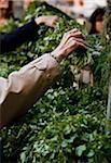 Une femme en sélectionnant des herbes à un marché agricole