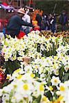 Daffodils for sale at flower market for Chinese New Year, Mongkok, Kowloon, Hong Kong, China