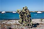 Galapagos Islands, Motor yachts moored off  South Plaza island.