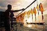Sulawesi, en Indonésie, les îles Banggai. Pêcheur suspendu ses captures de calmars sécher dans l'Atoll de sagou.