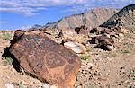 Pétroglyphes près de la route de Likir, Tangyar vallée, Ladakh, North West India