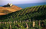 Italien, Sizilien, Eraclea Monoa. Weinberge in der Nähe der Küste bei Capo Bianco.