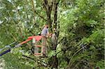 Man Trimming Tree Branches from Cherry Picker, Salzburg, Austria