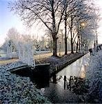 Zuid-Holland, farm and gate near Nieuwerbrug on a frosty morning.