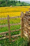 Flowering spring meadow, Swaledale, Yorkshire Dales National Park, England