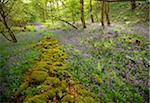 Springs Wood, Yorkshire Dales National Park, England