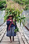 Au Pérou, une femme avec une charge de tiges de maïs pour nourrir ses porcs traverse un pont étroit qui enjambe la rivière Urubamba.