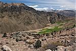 Pérou, fermes utilisant pré-inca en terrasses sur les pentes de la magnifique Canyon de Colca.