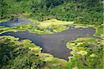 Aerial View of the rainforest near Iquitos, Peru