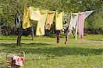 Vêtements suspendus sur la corde à linge dans le jardin