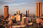 Kenya, Nairobi. Skyline de Nairobi baigné en fin d'après-midi au soleil comme un troupeau de l'ibis sacré voler au-dessus.