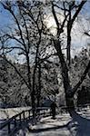 Person Walking in Winter, Bad Duerrheim, Black Forest, Baden-Wurttemberg, Germany