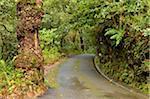 Rainforest in Queimadas, Madeira, Portugal