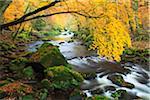 Pruem River, Naturpark Südeifel, Rheinland-Pfalz, Deutschland