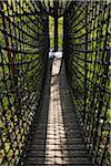 Canopy Walkway in Biosphaerenhaus, Fischbach bei Dahn, Pfaelzerwald, Rhineland-Palatinate, Germany