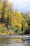 Flyfisherman casts for wild Steelhead on Deep Creek, Kenai Peninsula, Southcentral Alaska, Autumn