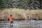 Fly fisherman fishing for Dolly Varden char on Deep Creek, Kenai Peninsula, Southcentral Alaska, Autumn