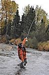 Fly fisherman netting a Dolly Varden char on Deep Creek, Kenai Peninsula, Southcentral Alaska, Autumn